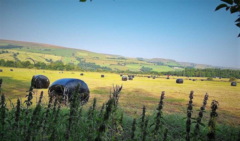Green Belt fields in Edenfield after silage making